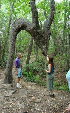 Bijzonder raar gegroeide boom