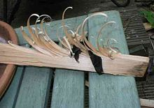 This is a feather stick. It is simple to make and a great way to start a fire. You take some dry wood and with your knife shave slivers of wood but keep them attached to the piece of wood. The shavings of wood now become your tinder that help get the larger chunk of wood burning. This photo shows pieces of char cloth in it to start your fire. I use char cloth or cotton balls covered in Vaseline.