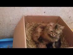 Week Old Cute Kittens - Cat Behavior Time Lapse Movie