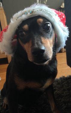 Bas met kerst