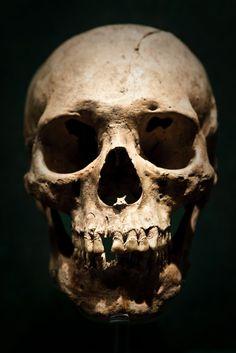 Skulls n Skeletons Skull Reference, Anatomy Reference, Bd Art, Skull Anatomy, Real Skull, Skull Nails, Totenkopf Tattoos, Skull Pictures, Bild Tattoos