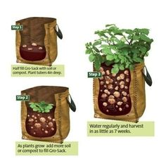 Potato Planters are a Very Handy way of Growing Potatoes when you don't have room. Our Potato Grow Bags are Available with Fast Delivery Grow Potatoes In Container, Growing Tomatoes In Containers, Container Vegetables, Planting Vegetables, Growing Vegetables, Container Gardening, Gardening Tips, Organic Gardening, Grow Tomatoes