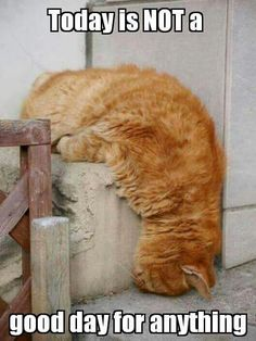 Fluid cat.