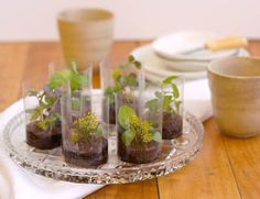 Recipe for edible terrariums