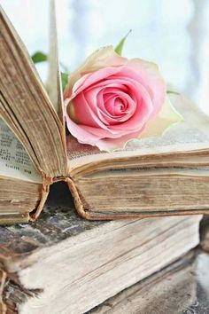 Pink rose resting on a book ... Two of my favorite things
