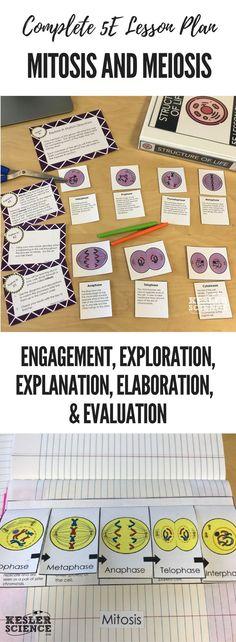 essay favorite teacher responsibility