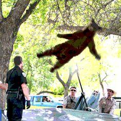 Falling bear meme