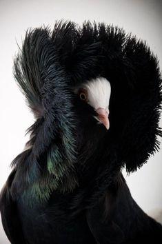 Kuşlar renkler ile oldukça ilgi çeken canlılardır... Kuşların komik ve doğal hallerinin fotoğrafları ve Kuşların komik ve doğal halleri sizi çok güldürecek...