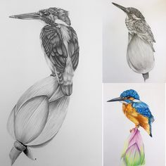 My last drawings of 2017 my favourite subject the common kingfisher. I am not sure what I enjoy the most graphite or colour pencil. Happy New Years everyone. Bird Pencil Drawing, Pencil Shading, Pencil Drawings, Composition Drawing, Common Kingfisher, Australian Birds, Bird Illustration, Bird Art, Sketches