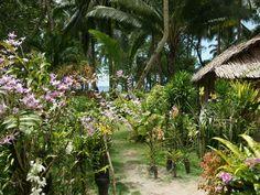 orchid_garden-dsc00140-wp.jpg (1600×1200)