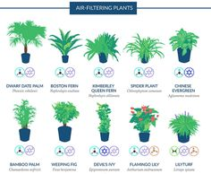 indoor plants to filter the air- check for pet toxicity