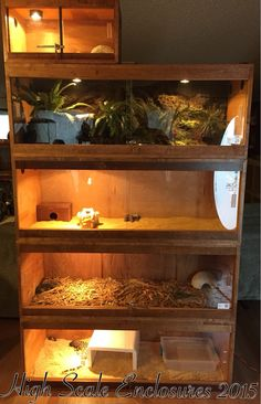 Diy Custom 3 Tier Wooden Enclosures For Bearded Dragons