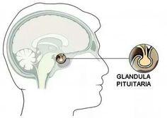 Pituitaria