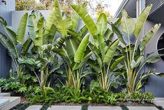 tropical garden Landscape Design Balmain A - garden Tropical Garden Design, Tropical Landscaping, Modern Landscaping, Landscaping Tips, Front Yard Landscaping, Tropical Gardens, Pool Landscaping Plants, Tropical Patio, Acreage Landscaping