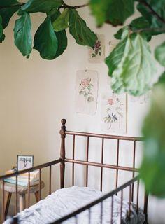 Fleur Papier | Halli Hitchner #organic #naturalnursery #botanical