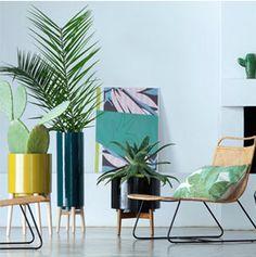 Plante verte d'intérieur, pot noir et bois naturel pour un style Urban Jungle