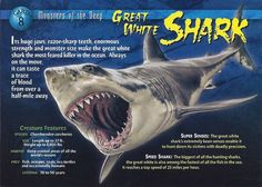 This has a common trading card and a Diamond Power card. Names Of Dinosaurs, Types Of Sharks, Monster Book Of Monsters, Underwater Creatures, The Great White, African Cichlids, Wild Creatures, Animal Species, Animal Facts