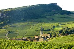 Vergisson-with-vineyards, Bourgogne, France.