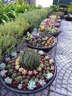 Succulent Gardens Potted Succulent Gardens: Succulents look good planted together in containers to decorate your outdoor entertaining areas. garden gardening ideasPotted Succulent Gardens: Succulents look good planted together in containers to decorat Succulent Landscaping, Succulent Gardening, Succulent Pots, Cacti And Succulents, Front Yard Landscaping, Planting Succulents, Container Gardening, Landscaping Ideas, Organic Gardening