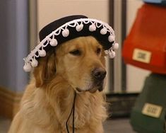 The Top 10 Dogs from TV Sitcoms - Comet from 'Full House'