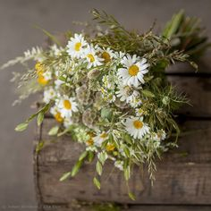 Fresh flowers for a hot Summer's day #Summerflowers#ZitaElzeMeadow#bouquet with ox-eye#daisies, #grasses, #ammi, #nigella, #craspedia, #poppyhead, dried #scabious seed pods and#camomile- photo Julian Winslow / New Covent Garden Flower Market. Deliveries nationwidehttp://zitaelze.com/bespoke-bouquets/#britishflowers #meadowflowers #oxeyedaisy #white #whiteflowers #instaflowers #flowersofinstagram #flowerstagram #floral #flowerphotography #flowers #flores #fleurs…