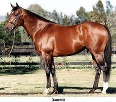 Danehill(1986)Danzig- Razyana By His Majesty. 3x3 To Natalma, 5x5 To Hyperion. 9 Starts 4 Wins 1 Second 2 Thirds. $321,065. Won Free H, Cork & Orrery S(Ire-3), Sprint Cuo(Eng-1), 3rd 2000 Guineas(Eng-1), July Cup(Eng-1). Died In 2003.