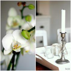 White orchid / Valkoinen orkidea