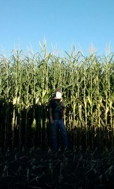 """Great photo from Reddit: """"Silage corn came in tall this year, I'm 6'1"""" for comparison"""""""