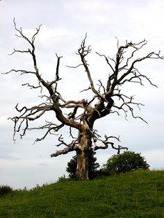 Weird tree in England