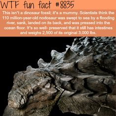 dinosaur mummy - WTF fun facts