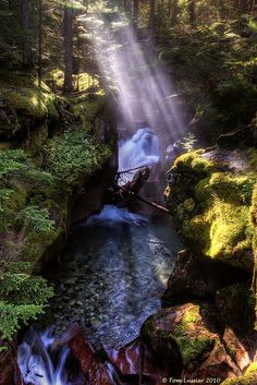 Sunlight onto Avalanche Creek, Glacier National Park, Montana |  copyright Tom Lussier Photography