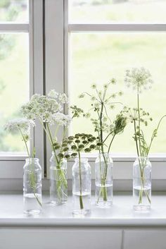 sill decoration: What do you put on a windowsill? - - Blumendeco Window sill decoration: What do you put on a windowsill? - - Blumendeco - Window sill decoration: What do you put on a windowsill? Ideas Florero, White Flowers, Beautiful Flowers, Single Flowers, White Trees, Diy Flowers, Beautiful Pictures, Queen Annes Lace, Deco Floral