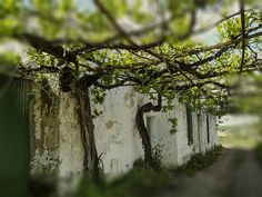 Casa abandonada2