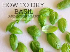 How to dry basil and other herbs. Did you know you can do it in the microwave?? FunCheapOrFree.com #Herbs #DIY