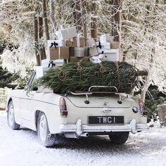 Old car loaded down with Christmas Trees