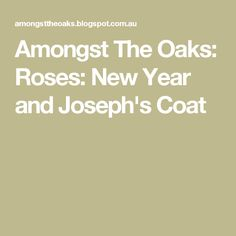 Amongst The Oaks: Roses: New Year and Joseph's Coat
