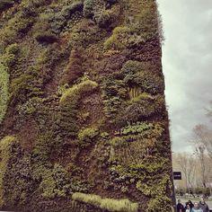 Vertical garden #madridcaixaforum  #madridista #igersmadrid #igersspain
