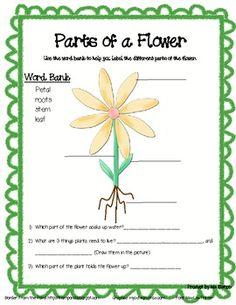 Daisy Flower Parts : daisy, flower, parts, Needs, Parts, Plants, Ideas, Plants,, Plant, Science,