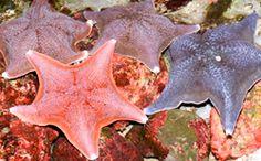 Shedd Aquarium - Chicago | Sea Stars