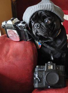 hipster pug. soooo stinking cute