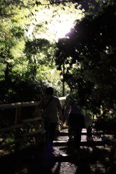 奈良公園の夜道は暗いので、気をつけて!