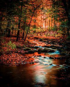 Sunset at Kooser Run – Kooser State Park, Pennsylvania
