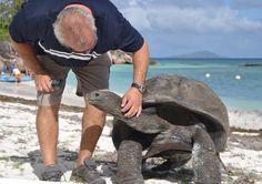 Riesenschildkröte :-)