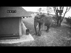 This Good Samaritan Elephant Knows What To Do With Litter