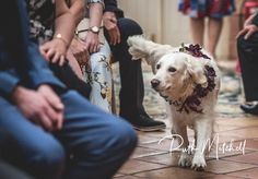 Dog carries rings down aisle at The Crab and Lobster, Thirsk, North Yorkshire Wedding Fair, Dog Wedding, Pre Wedding Photoshoot, Wedding Shoot, Getting Married Abroad, Crab And Lobster, Days Of Our Lives, North Yorkshire, Creative Studio