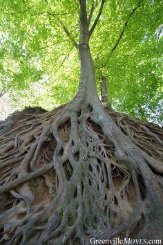 """The Tree"" at Falls Park - Greenville, SC"