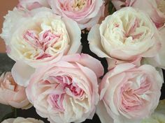 from the cut rose collection. Parfum Flower Company Aalsmeer - Scented roses from David Austin and Tambuzi farm > Photo Gallery Parfum Flower, Parfum Rose, Diy Bouquet, Rose Bouquet, Diy Wedding Flowers, Floral Wedding, David Austin Rosen, Wholesale Florist, Pinterest Garden