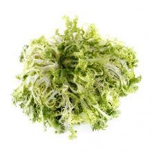 Imagen en la que se ve una escarola Vegetables Garden, Herbs, Autism, Concept
