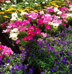 En cualquier espacio se puede celebrar esta hermosa época del año. Tal vez no puedas crear una réplica de los jardines colgantes de Babilonia, pero si puedes hacer tu pequeño santuario vegetal y ser parte de este fenómeno de la madre naturaleza.