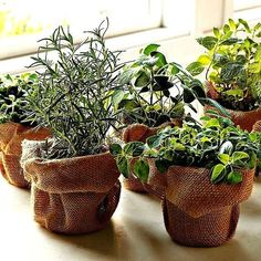 No matter what your space is like, find the best indoor herb garden for you and enjoy the fresh flavors and healing benefits of herbs all year round. Hydroponic Gardening, Hydroponics, Container Gardening, Organic Gardening, Indoor Gardening, Indoor Plants, Indoor Herbs, Kitchen Gardening, Indoor Outdoor